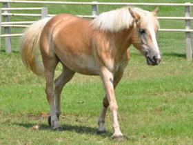 馬の安楽死
