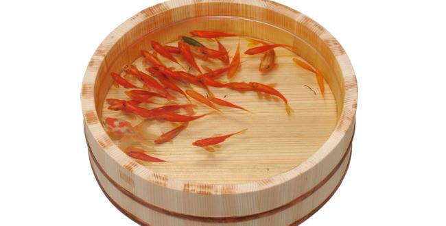 「旅行中の水槽が心配?金魚のエサはどうするの?~アクアリウム」のアイキャッチ画像