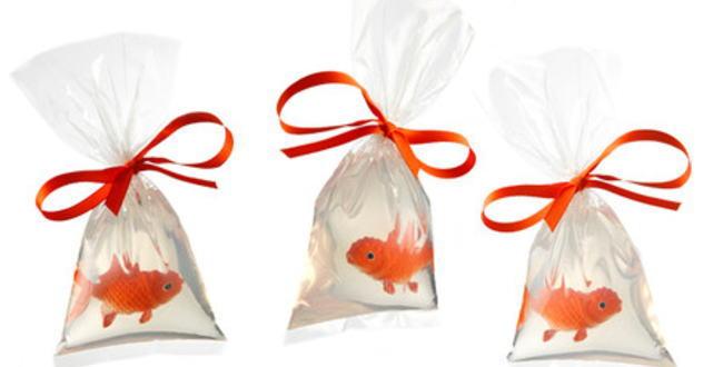 「魚すくいの金魚は療養を!【金魚の飼い方】」のアイキャッチ画像