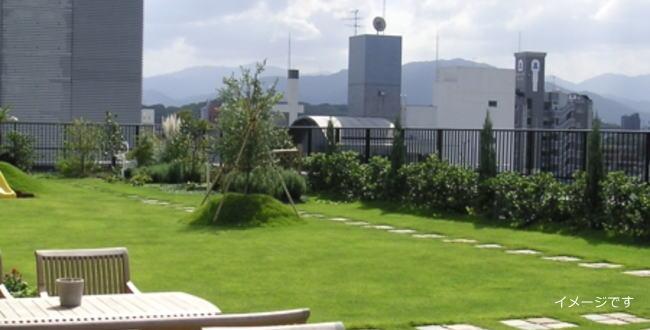 「屋上緑化して鉢水槽にメダカとドジョウ【アクアリウム】」のアイキャッチ画像