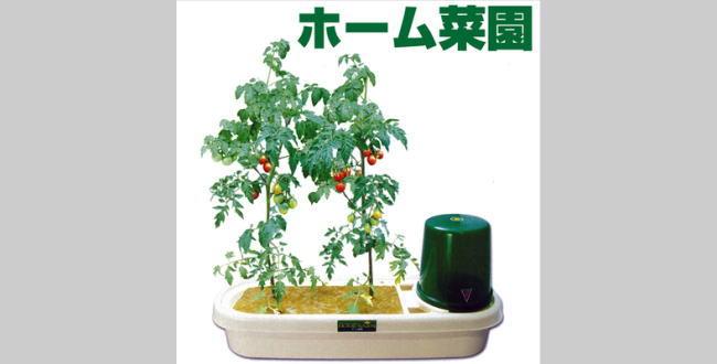 「家庭菜園【自動水やり簡単栽培セット】気軽に始める家庭菜園」のアイキャッチ画像